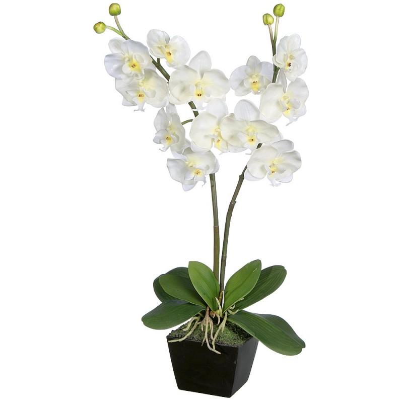 orchid e artificielle louer location de meubles. Black Bedroom Furniture Sets. Home Design Ideas
