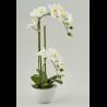 Orchidée artificielle à louer