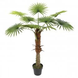 Location de palmier 1,10 mètres